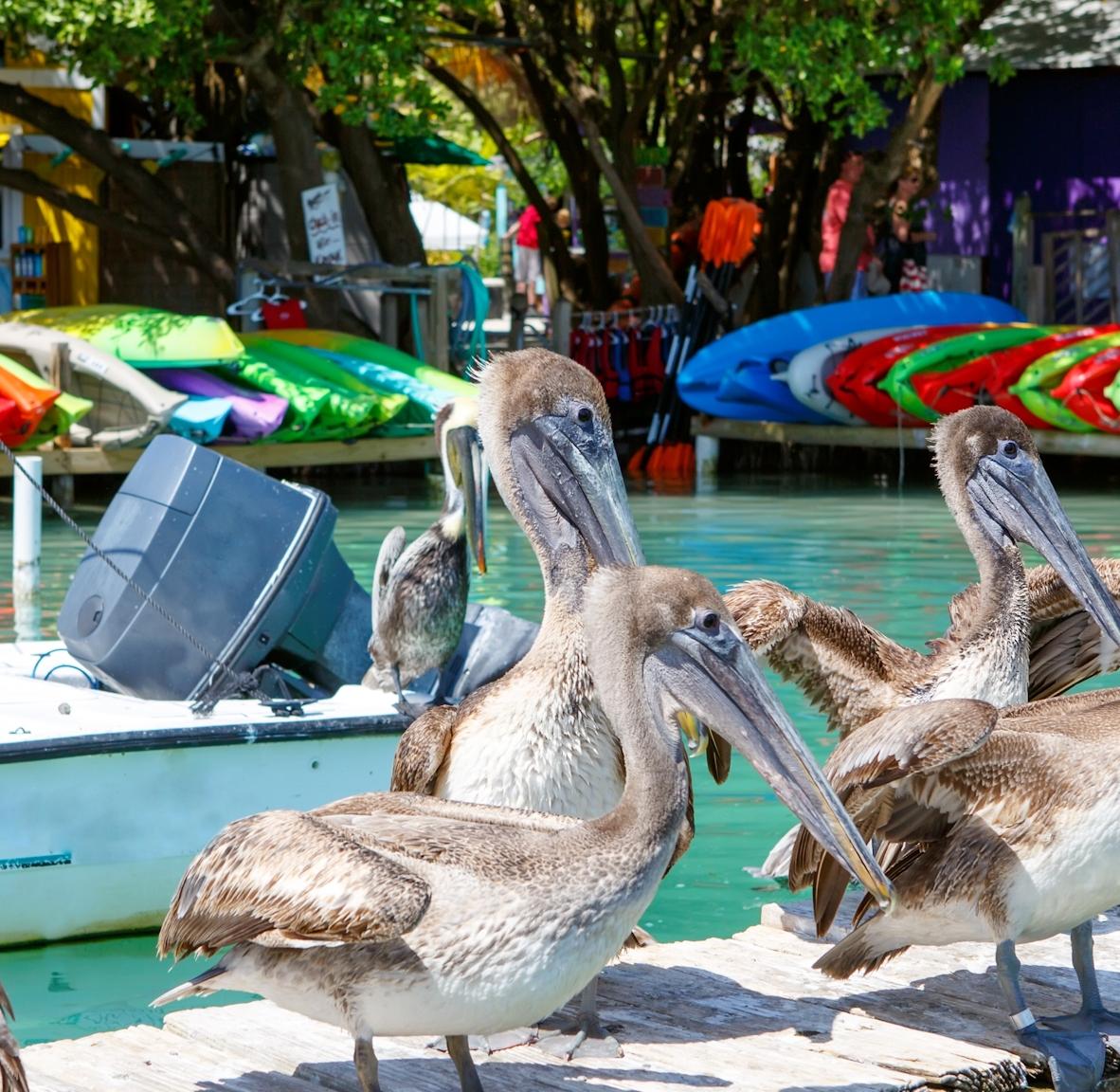 Venetian Shores Picture